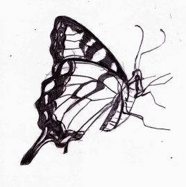 butterflycleansketch-web