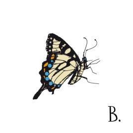 butterflyinkcolourweb