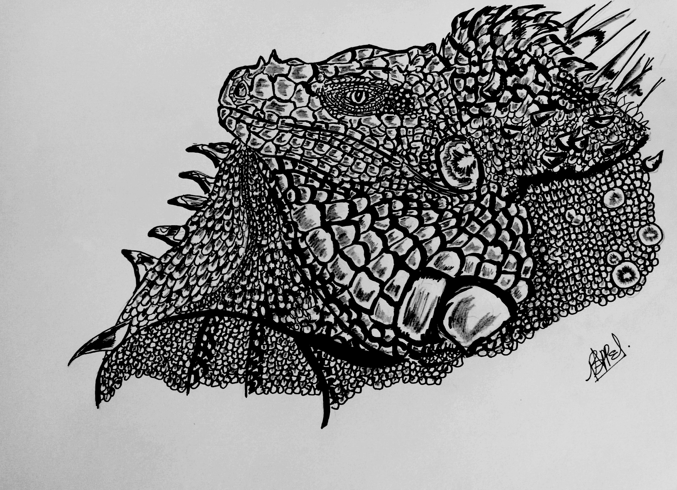iguana-ink-sketch-clean