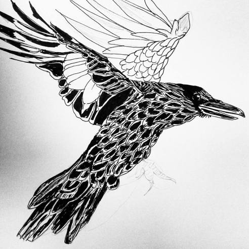 raven-fly1
