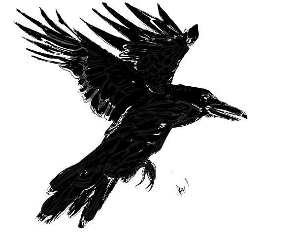 raven-flynbfinal