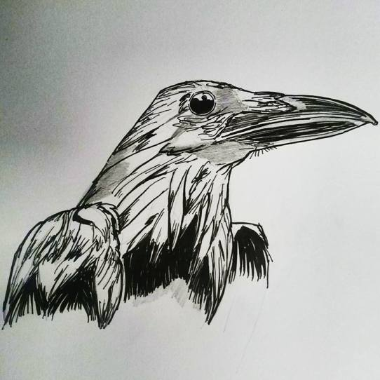 raven-stage1